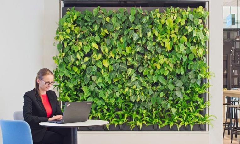 Naava-Green-Wall-Office-1020x610.jpg