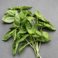 Basil; all types