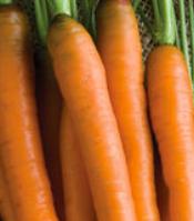 mokum_carrot
