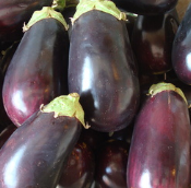 eggplant_galine