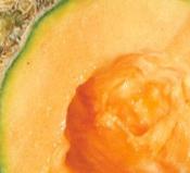 melon_goldstar