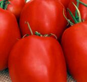 tomato_amishpaste