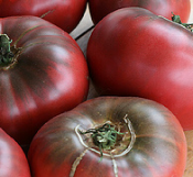 tomato_cheroke purple