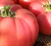 tomato_brandywine