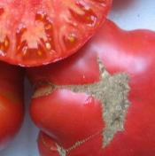 tomato_Weisnitchts Ukrainian