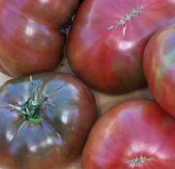 tomato_carbon