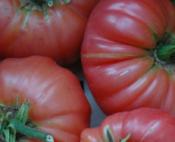 tomato_brandyboy