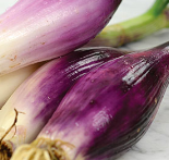 onion_redlong