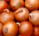 onion_yellow