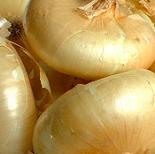 onion_cipollini