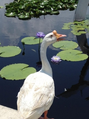 The youngsters can feed the ducks, geese and swans around City Park