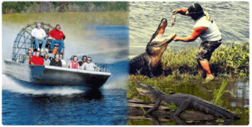 An airboat swamp tour and a gator getting a quick snack