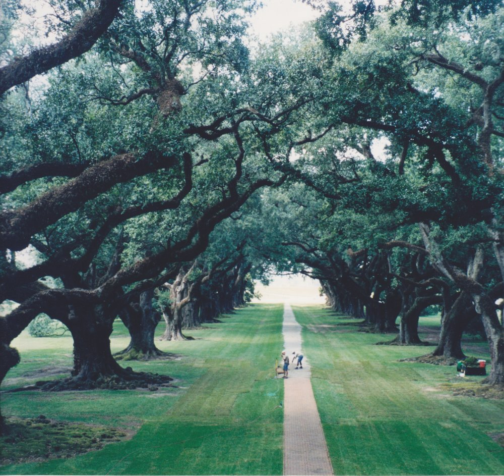 Oak Alley is kept in perfect order every day of the year