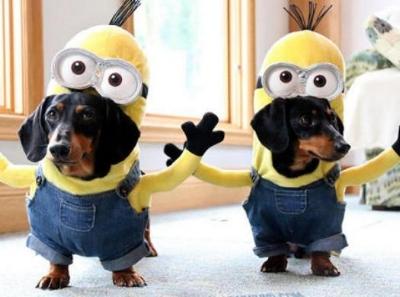 pets dressed up.jpg