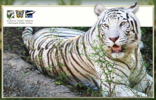 audubon-zoo.jpg