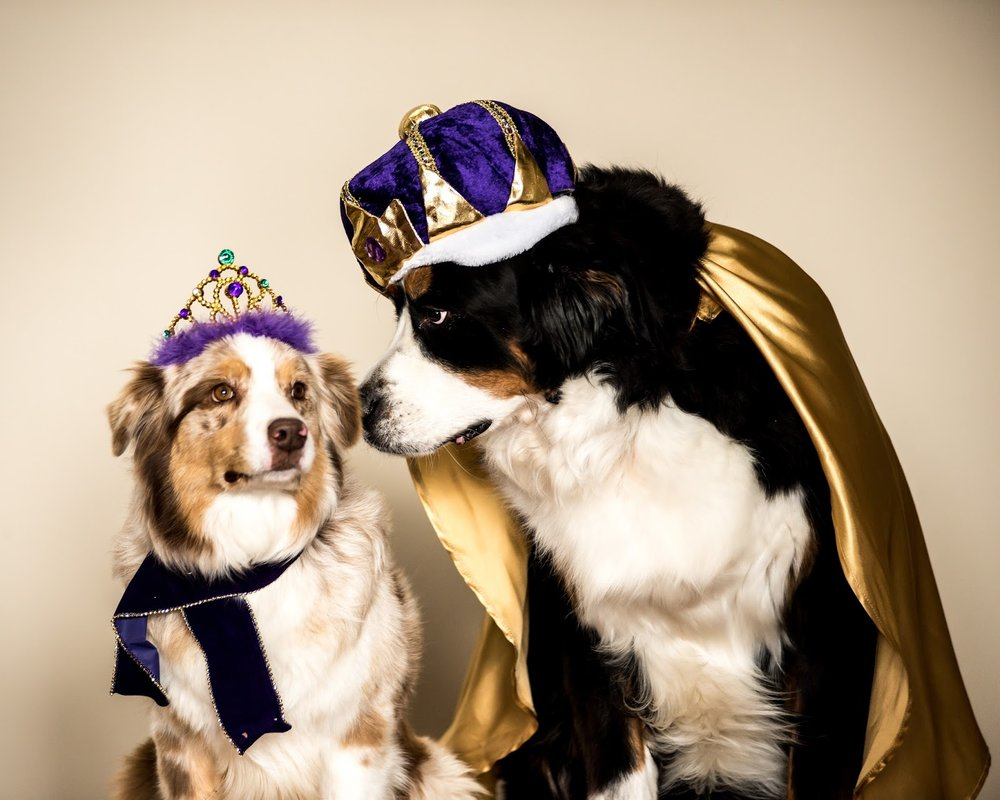 2017 Mardi Paws King and Queen 1.jpg