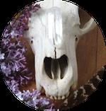 Skull_circle.png