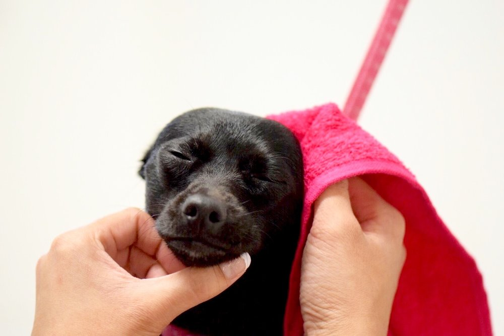 $500 SPONSORED SPA DAY FOR RESCUES