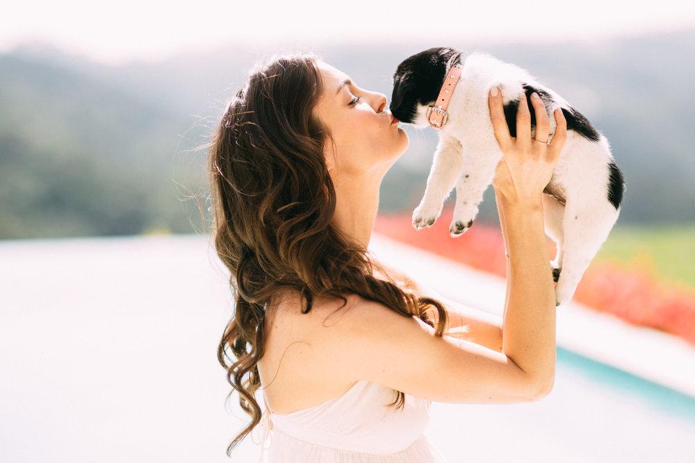 $250 SPONSOR AN ADOPTION: help 1 dog find his forever home