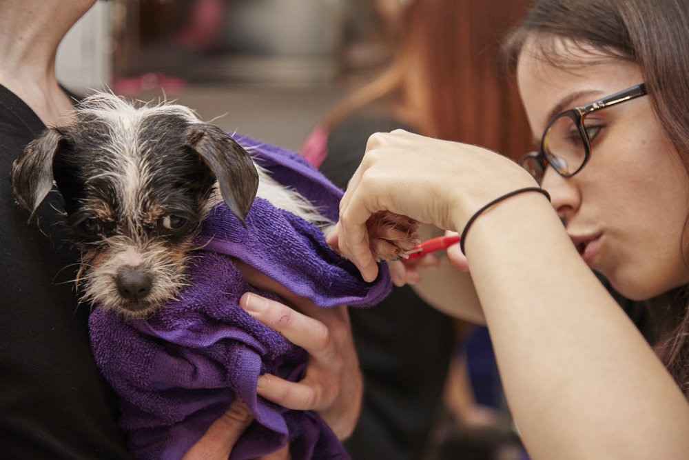 $25 GROOMING & NAIL CLIPPING: for one rescue dog