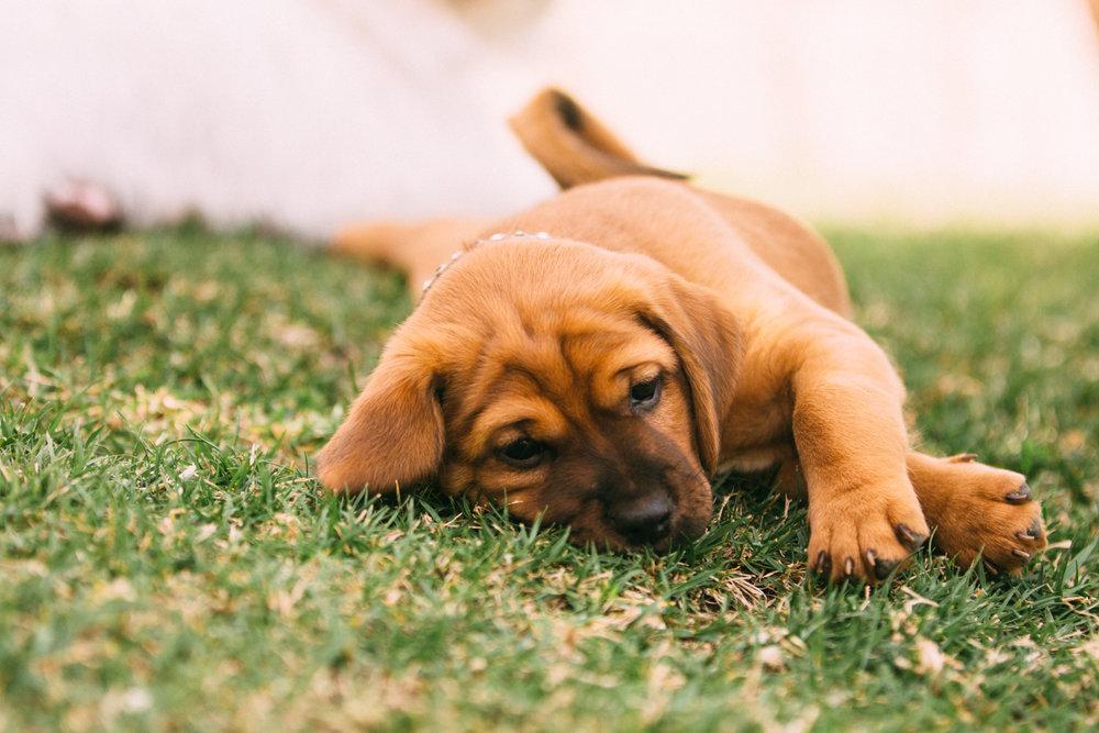 $100 SPONSORED VET VISIT : for one rescue dog