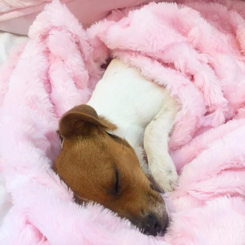 Fiona is enjoying her new life at home! Life couldn't be better and instead of sleeping in a high kill shelter, she is sleeping like a little princess on her new Vanderpump Pets plush blanket!