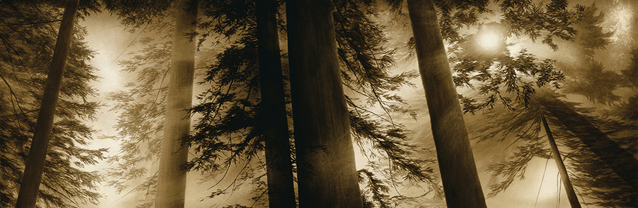 Joanne-Teasdale-Sacred grove.jpg