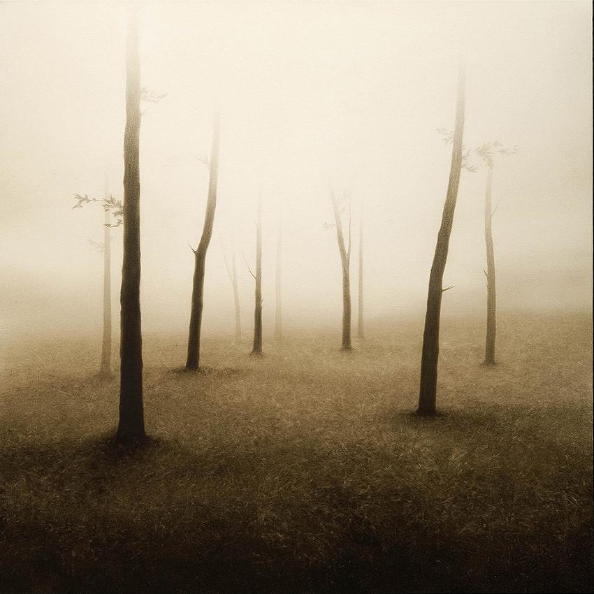 Joanne-Teasdale-Shadowland.jpg