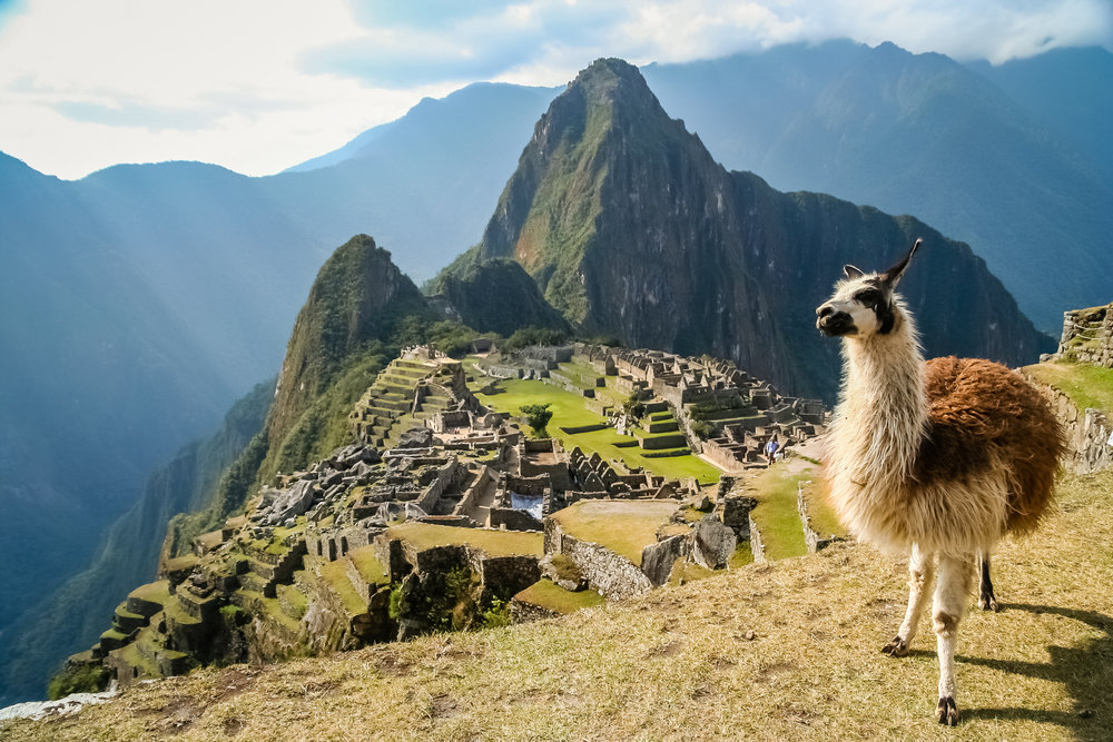 Lama-And-Machu-Picchu-588223086_3456x2304.jpeg