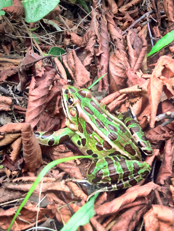 Frog 3.JPG