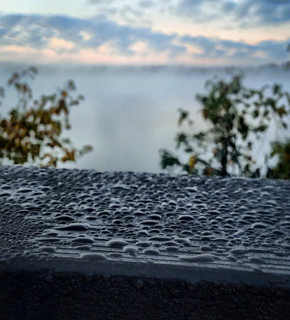 Morning dew.jpg
