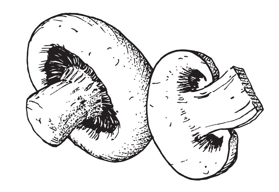 vect_mushroom.jpg.png
