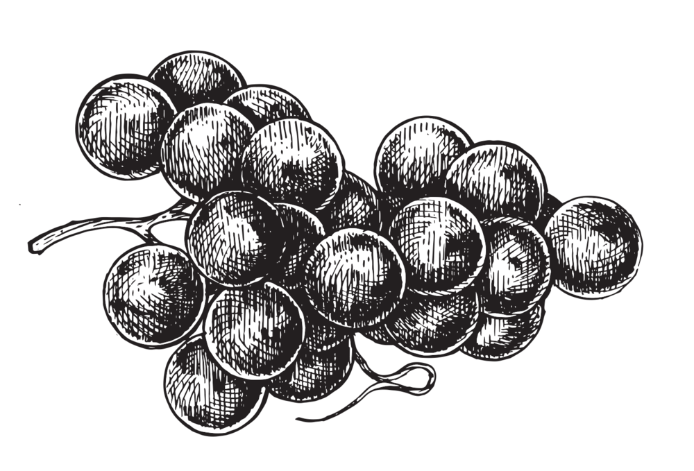 vect_grapes.jpg.png