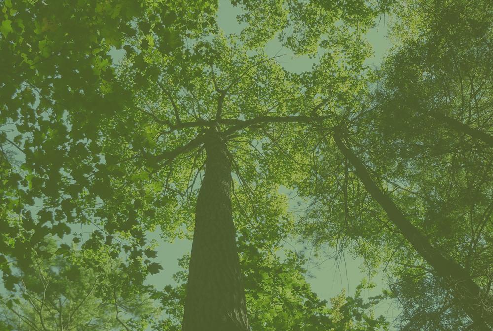 button_forest.jpg
