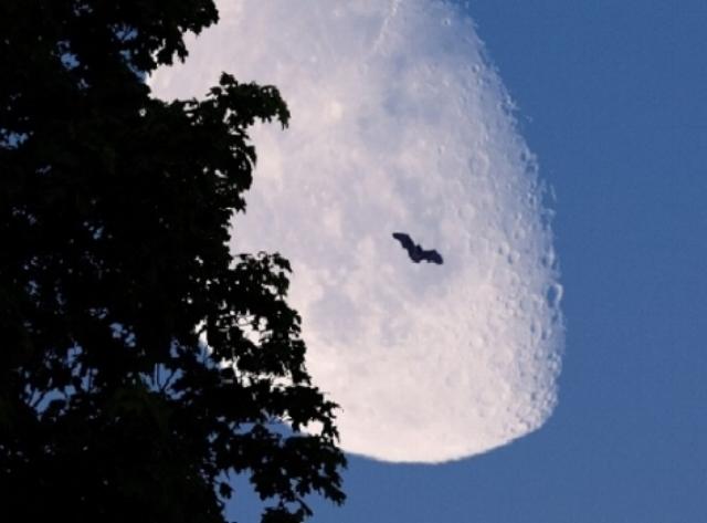 moon-2320216.jpg