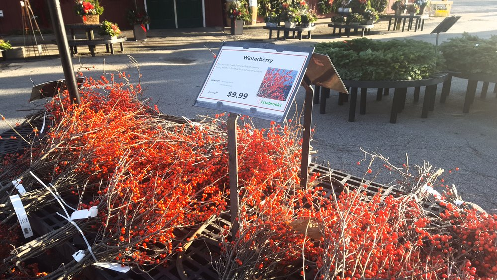 Winterberry bunches for sale at a local nursery.
