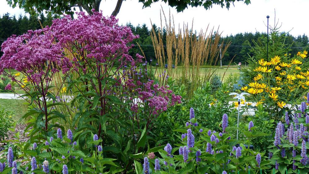 photo: plant4wildlife on Flickr