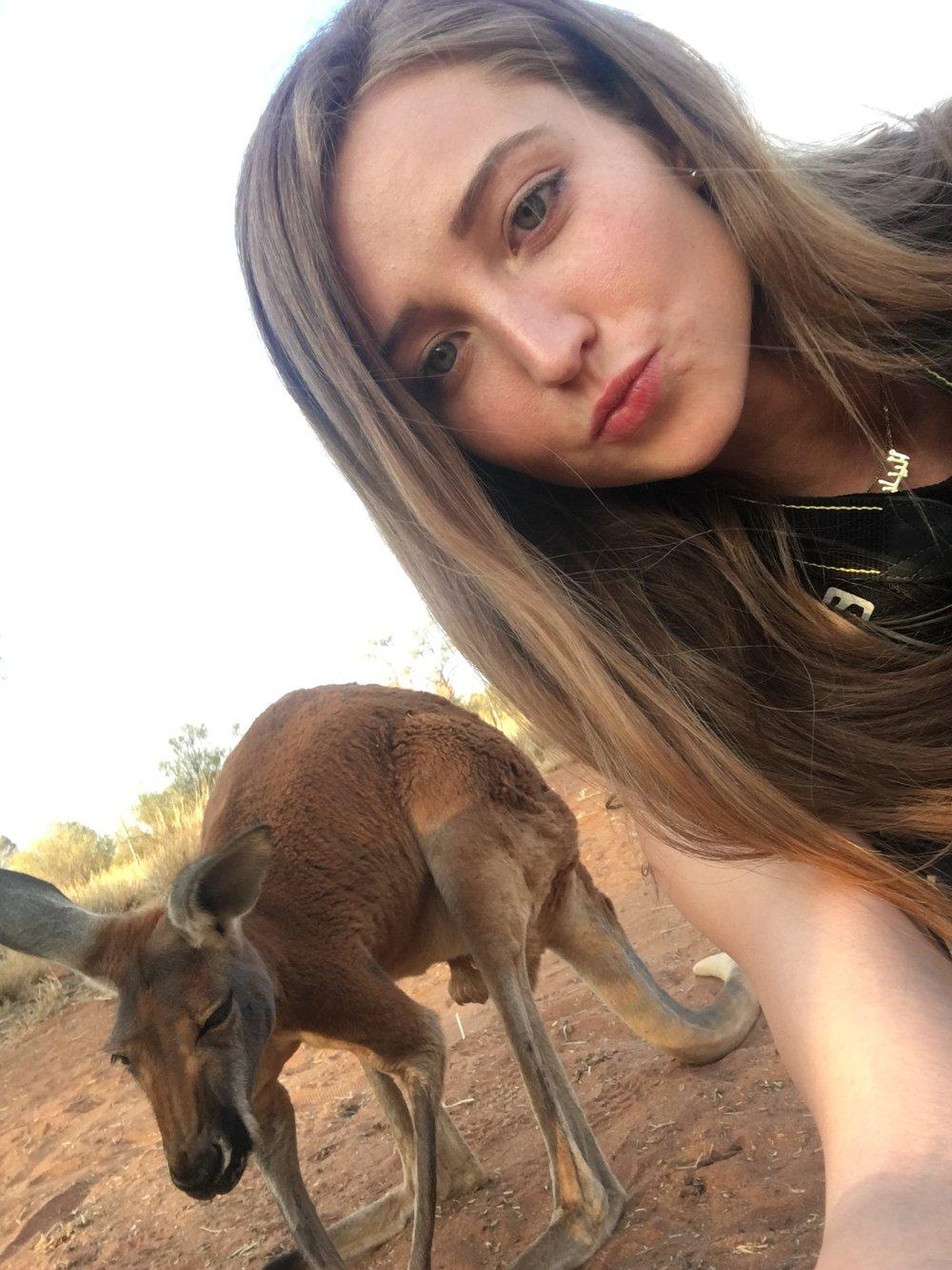 kangaroos northern territories alice springs