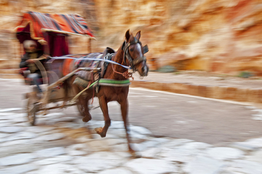 12.   Donkey cart in Petra.jpg