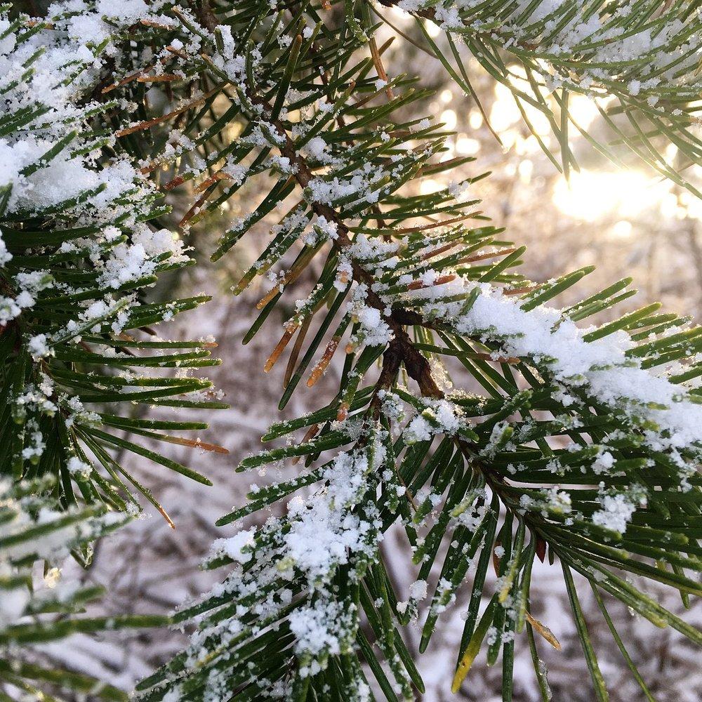Saxe-Point_winter_3.JPG