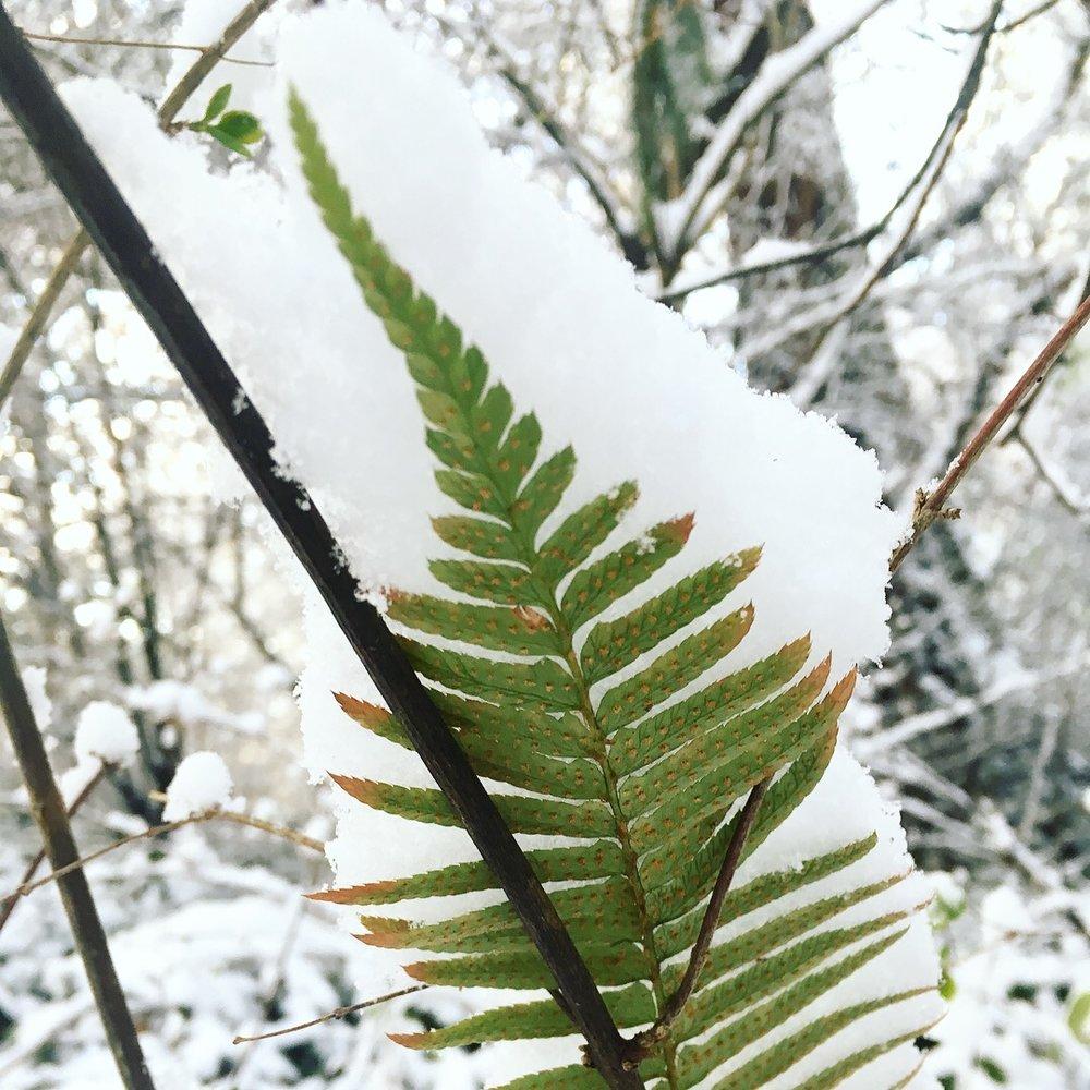 Saxe-Point_winter_4.JPG