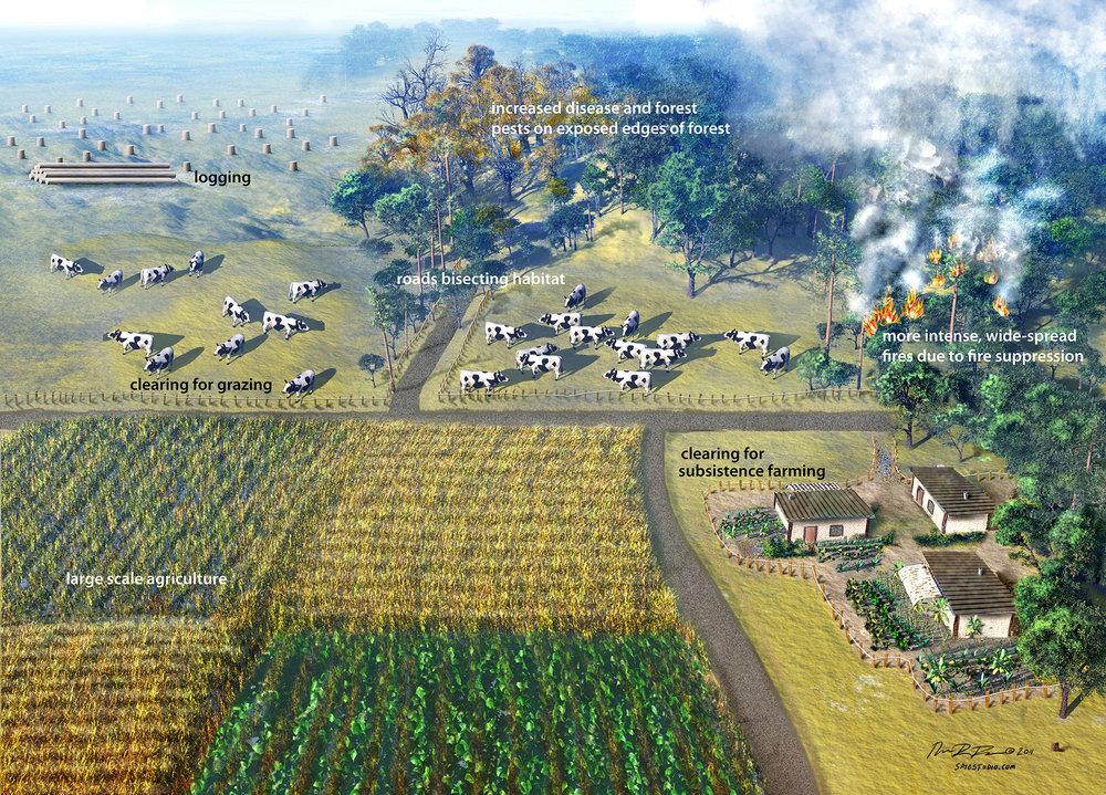 Food Backround (zoom pic).jpg