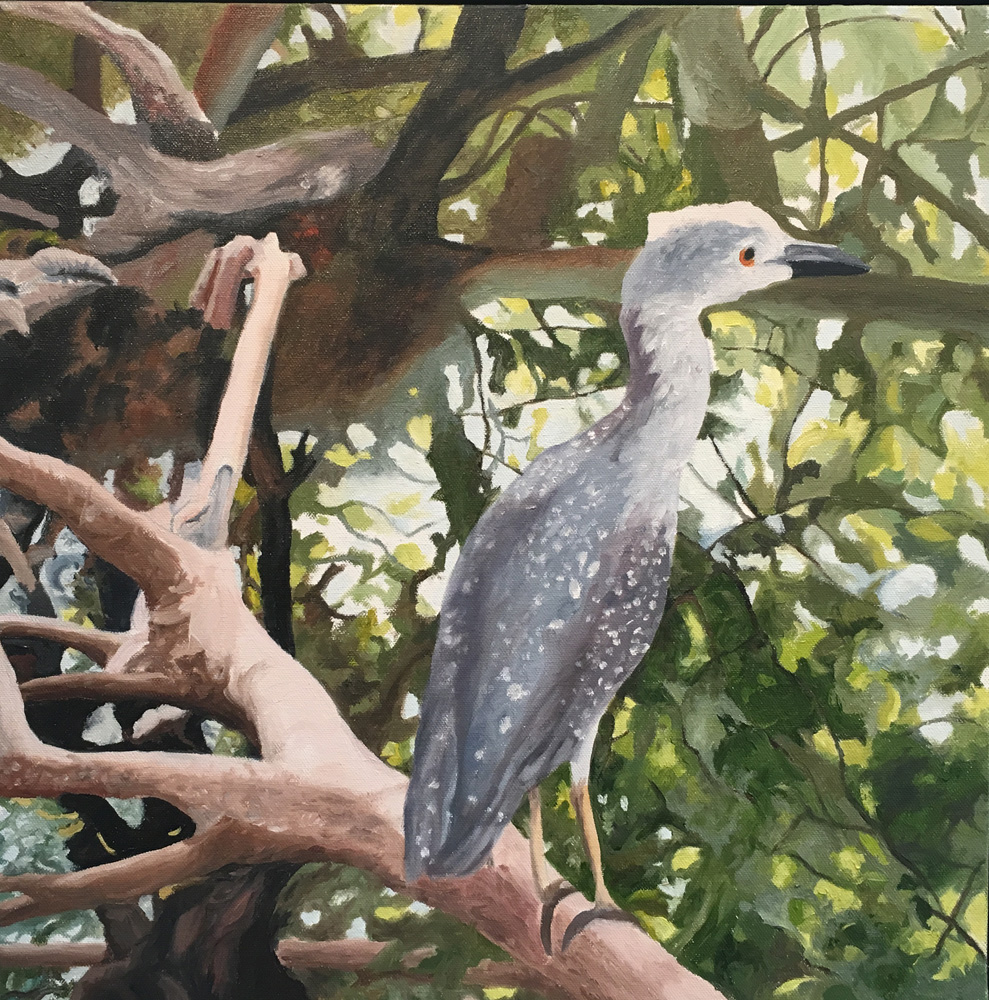 "Mangrove Heron, Water Soluble Oil Paint, 19.5"" x 19.5"""