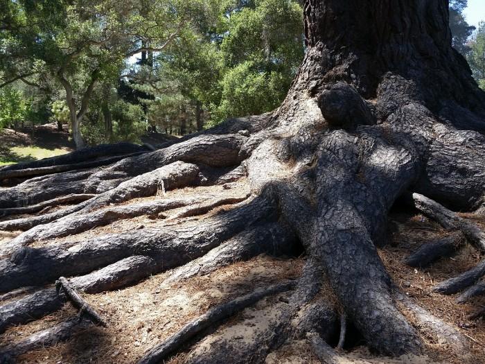 roots-785047_1280-e1470083345938.jpg