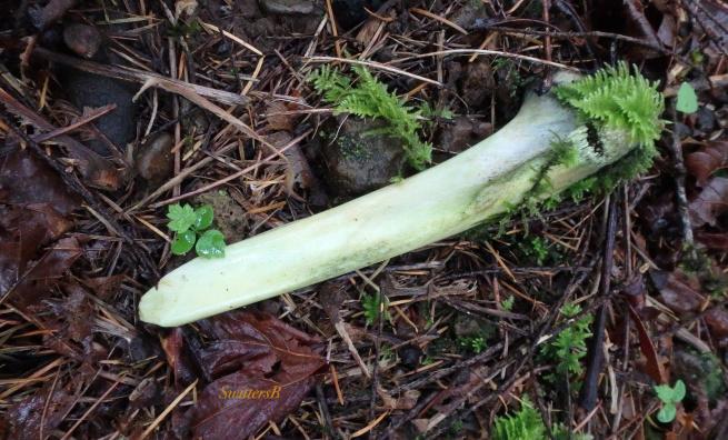 bone-moss-woods-swittersb.jpg