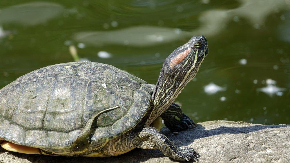 turtle-3633156_1920.jpg