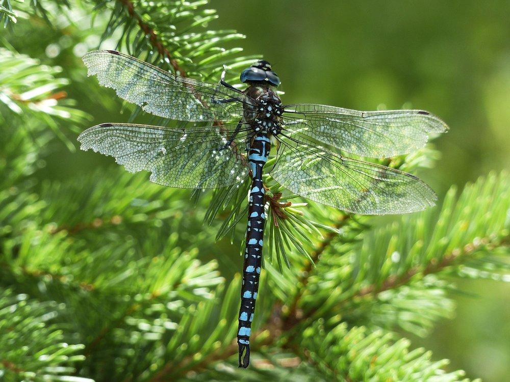 dragonfly-184165_1920.jpg