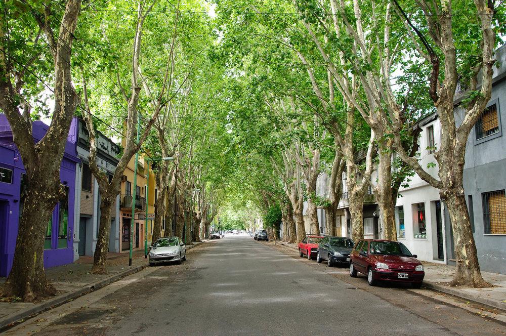 trees-in-BA.jpg