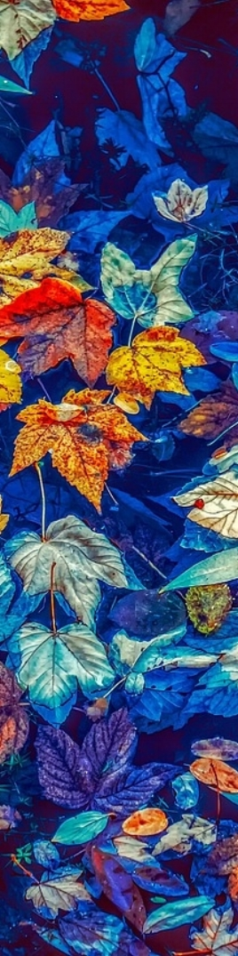fall-leaves-3744649_1280.jpg