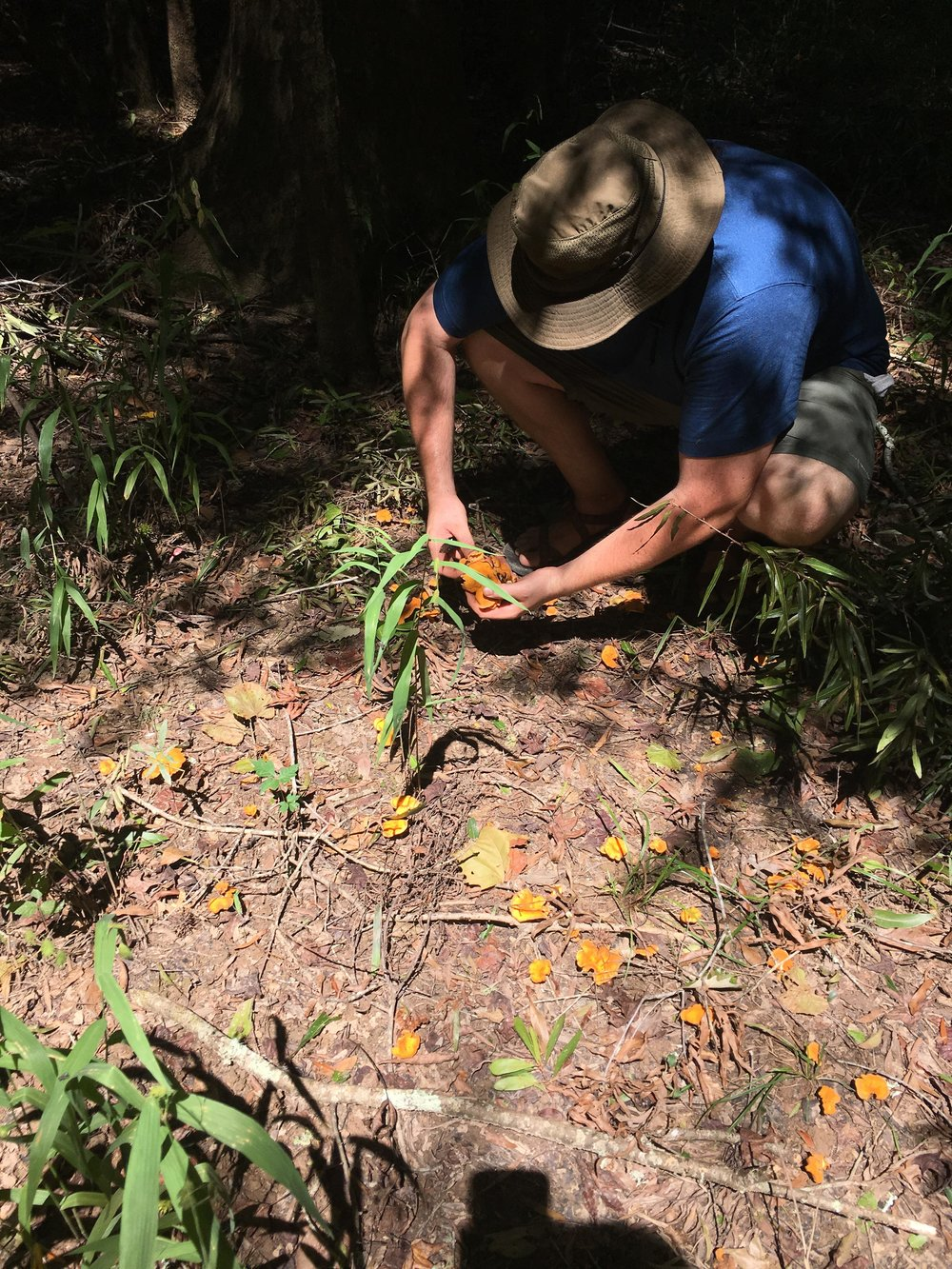 Harvesting a few choice Chanterelles.